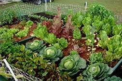 Благодаря бифогуму всхожесть семян увеличивается на 100%