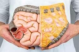 Благодаря Keto Genetic расщепляется висцеральный жир.