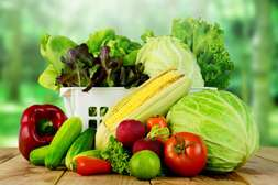 С КорнеМаксом вырастают крупные и вкусные плоды.