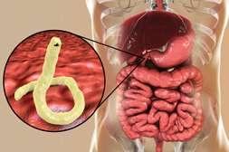 Польза Ашвамина в выводе ядов, продуктов распада из организма.