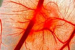 Варилиф регенерирует и восстанавливает функции сосудов.